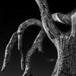 Drought Victim by Chris Sutton Photography